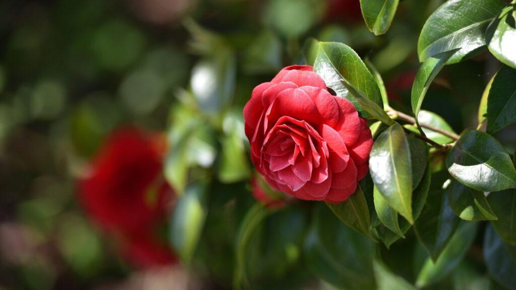 Conheça alguns tipos de plantas raras para cultivar em casa